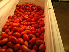 chest freezer full of tomatoes